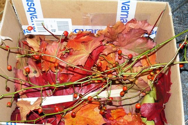 podzimní tvoření 014.jpg